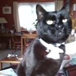 blackcatmikey