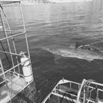 Sharkboy1973
